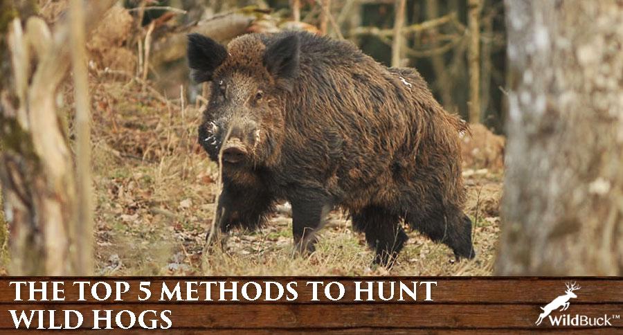The Top 5 Methods To Hunt Wild Hogs