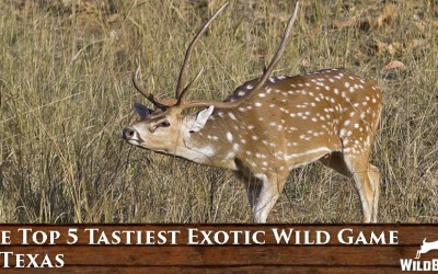 The Top 5 Tastiest Exotic Wild Game in Texas