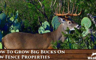 How To Grow Big Bucks On Low Fence Properties [TIP]