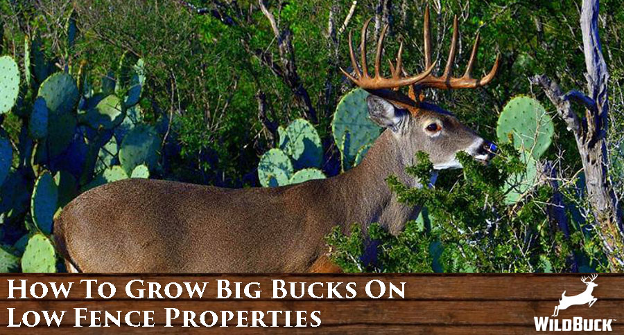 How To Grow Big Bucks On Low Fence Properties WP