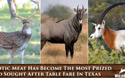 Exotic Meat Has Become The Most Prized And Sought After Table Fare In Texas