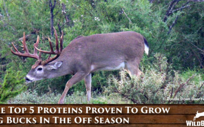 The Top 5 Proteins Proven To Grow Big Bucks In The Off Season