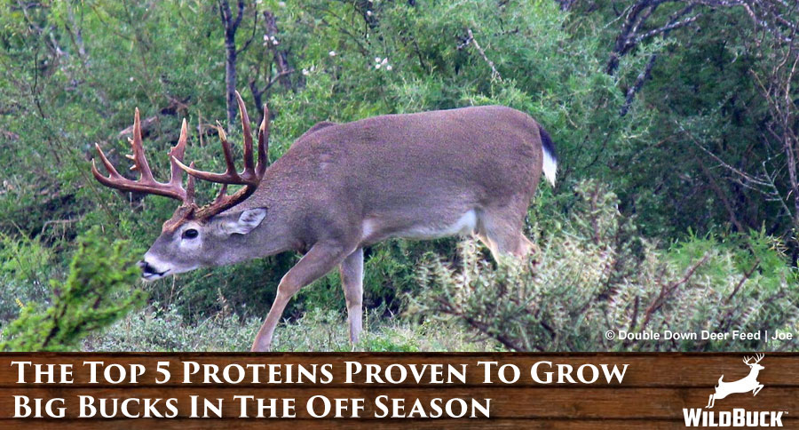 The Top 5 Proteins Proven To Grow Big Bucks