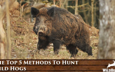 The Top 5 Methods To Hunt Wild Hogs
