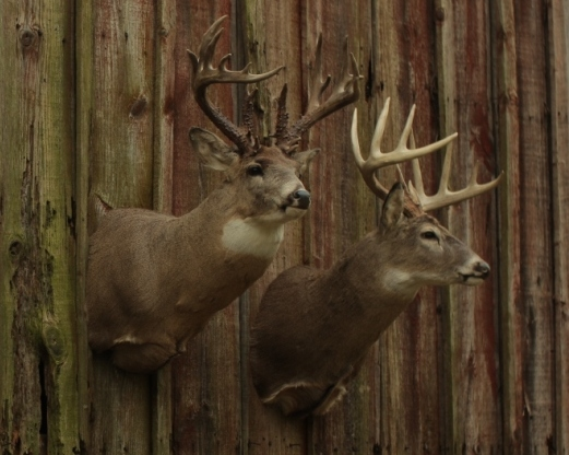Big Deer Blog - Biologist Mickey Hellickson