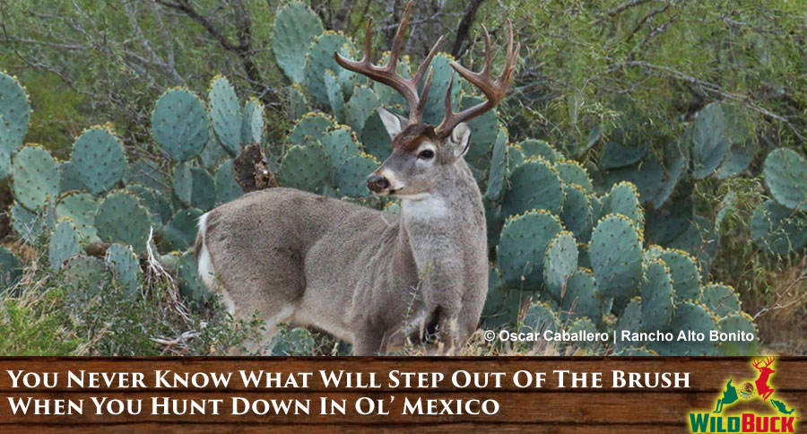You Never Know What Will Step Out Of The Brush When You Hunt Down In Ol' Mexico