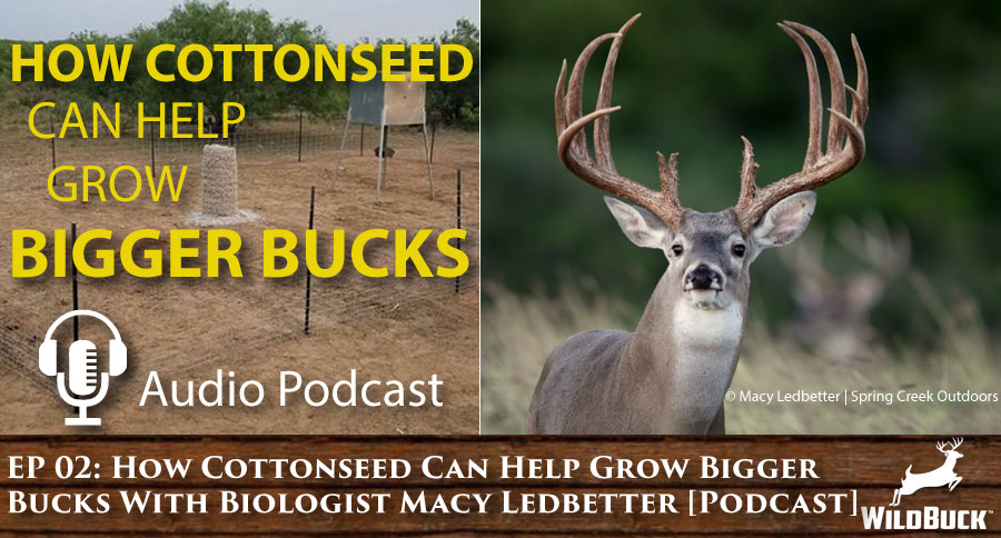 How Cottonseed Can Help Grow Bigger Bucks [Podcast] WP