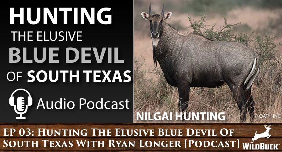 EP 03: Hunting The Elusive Blue Devil Of South Texas – Nilgai Hunting With Ryan Longer [PODCAST]