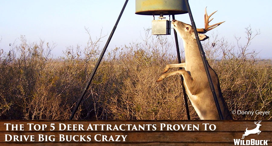 The Top 5 Deer Attractants Proven To Drive Big Bucks Crazy