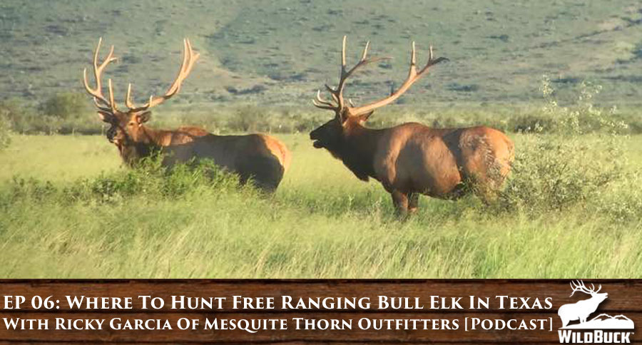 EP 06: Where To Hunt Free Ranging Bull Elk In Texas With Ricky Garcia Of Mesquite Thorn Outfitters [PODCAST]