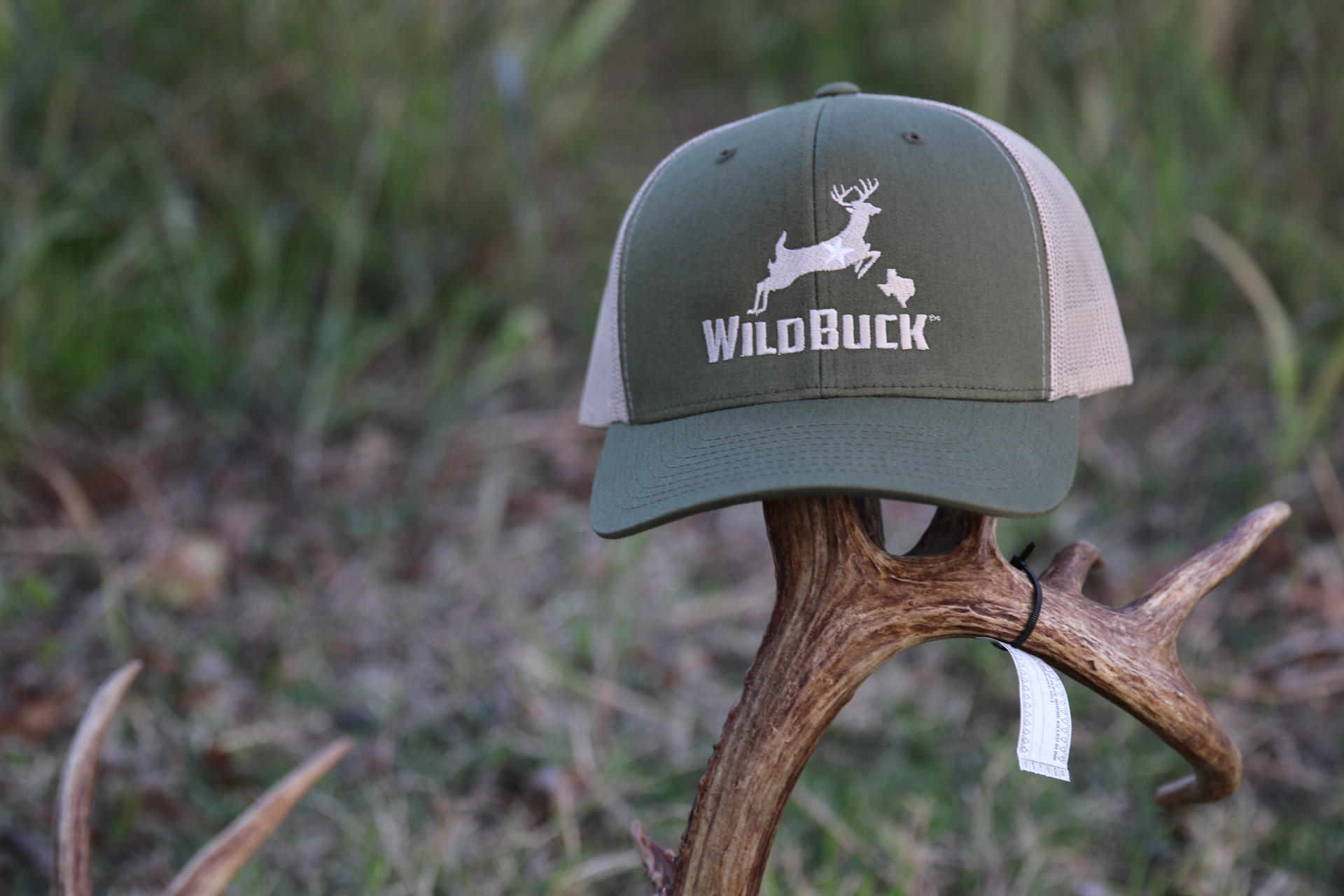 Texas Hat On Tagged Buck