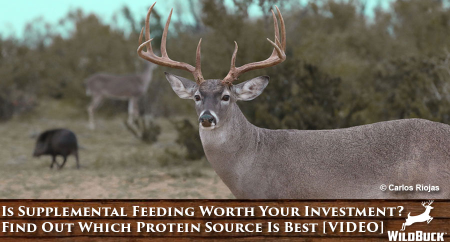 Is Supplemental Feeding Worth Your Investment? Find Out Which Protein Source Is Best [VIDEO]